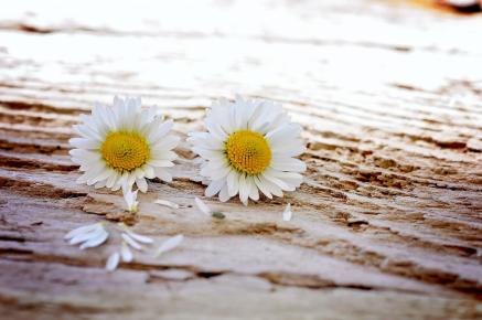 twee_bloemen